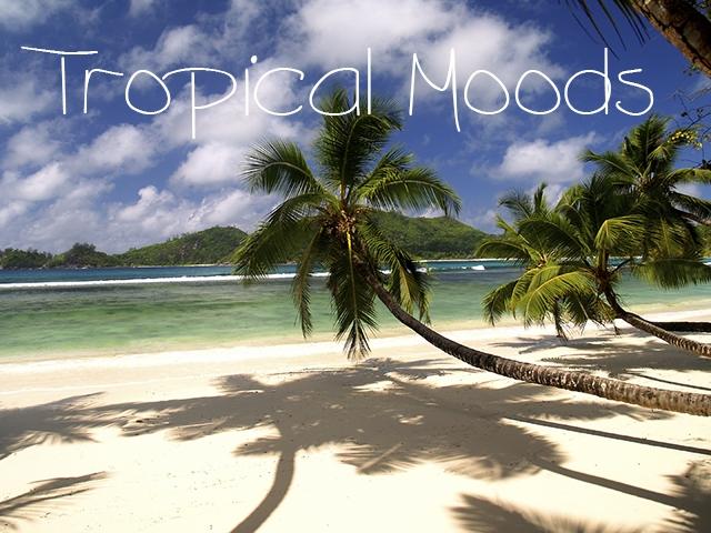 motywy tropikalne